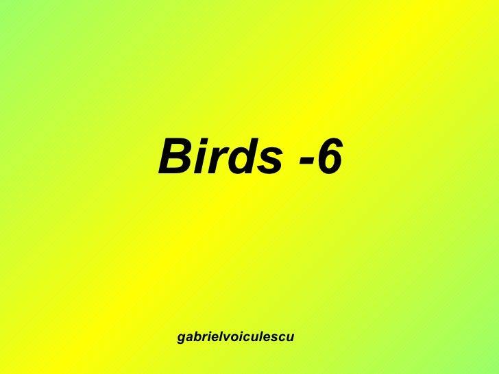 Birds -6 gabrielvoiculescu