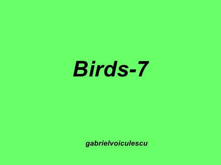 Birds-7 gabrielvoiculescu