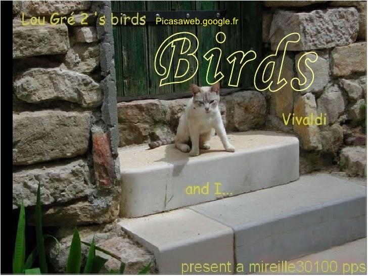 Birds Picasaweb.google.fr