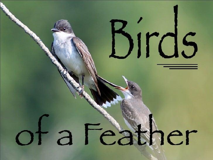 Eastern Kingbird Chick