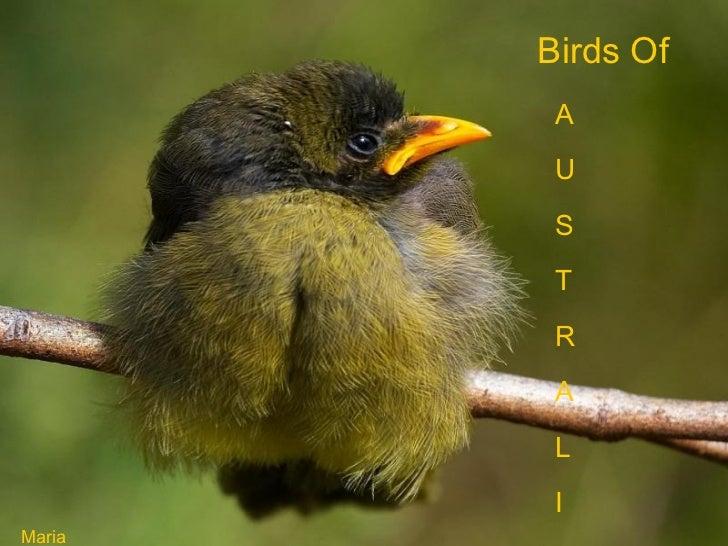 Birds Of  A U S T R A L I A Maria