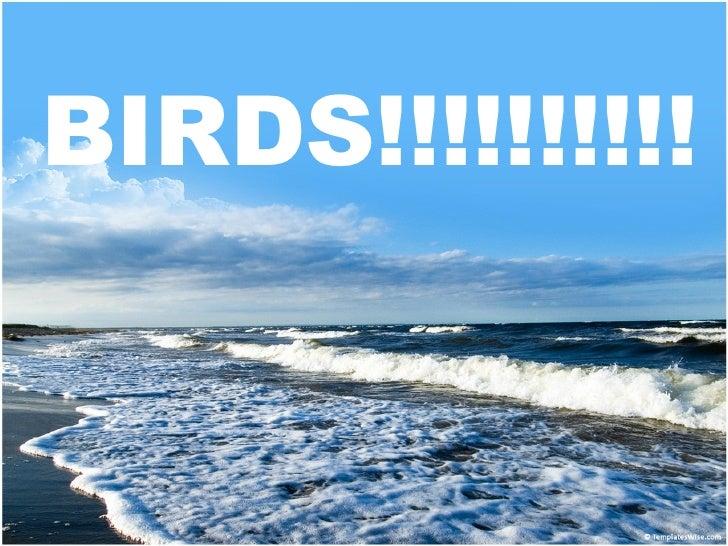 BIRDS!!!!!!!!!!