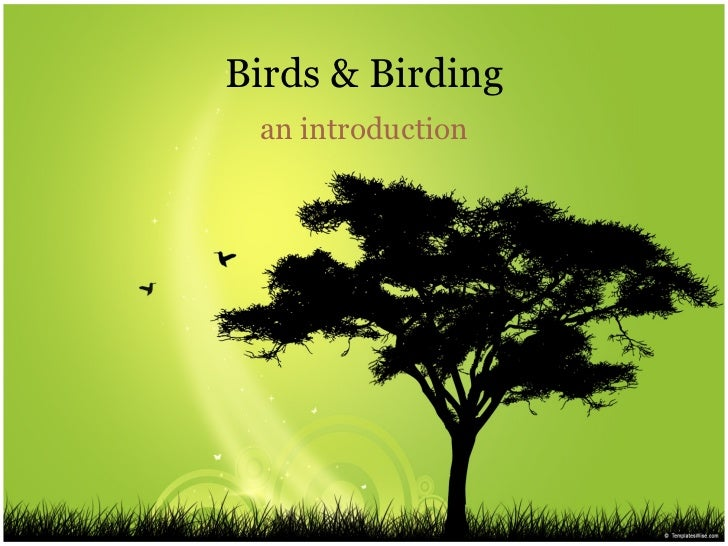 Birds & Birding an introduction