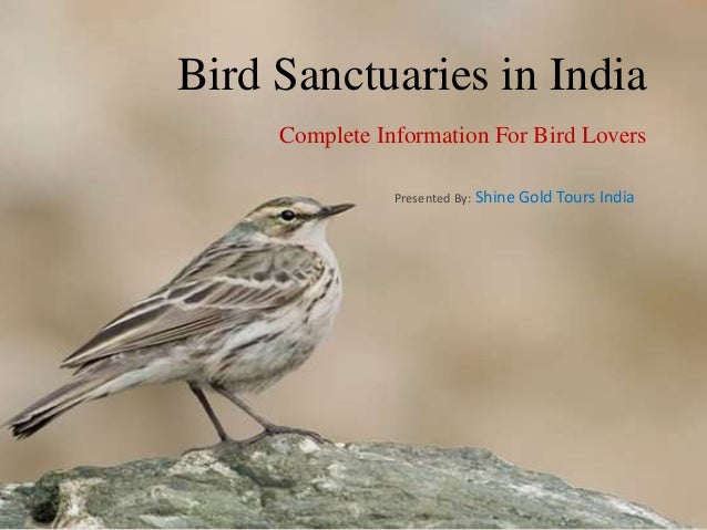 Bird Sanctuaries in India Complete Information For Bird Lovers Presented By: Shine Gold Tours India