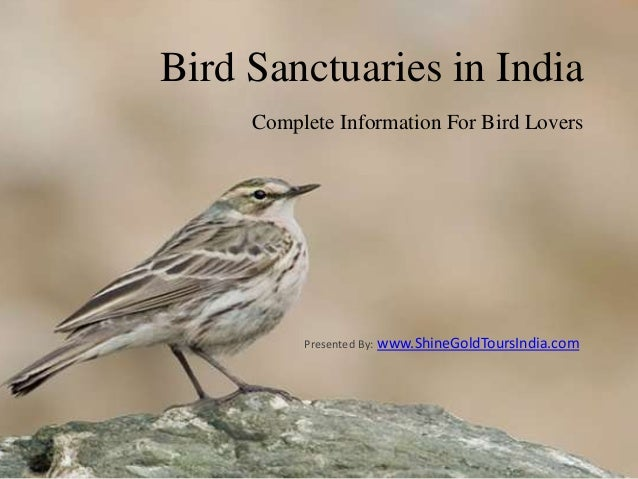 Bird Sanctuaries in IndiaComplete Information For Bird LoversPresented By: www.ShineGoldToursIndia.com