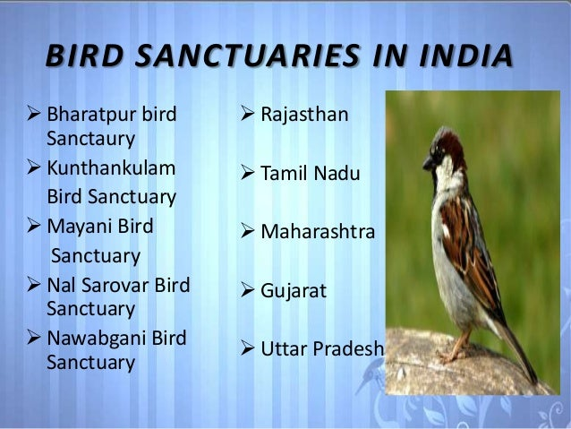indian wildlife birds
