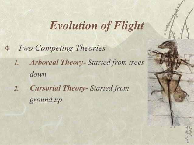 berkeley bird evolution