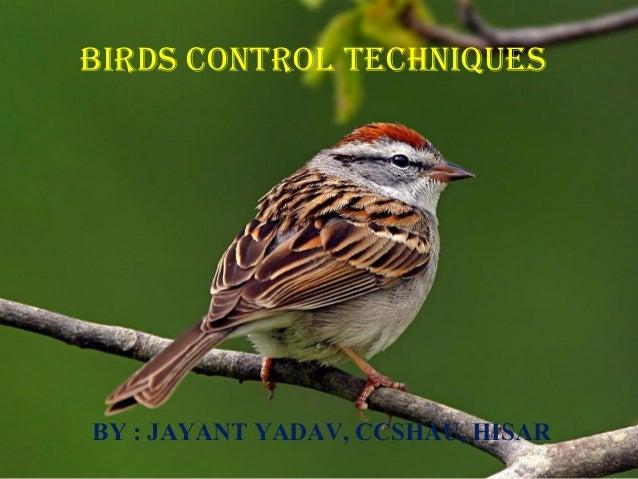 Birds control techniques