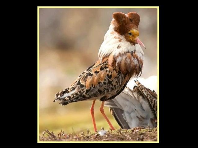 Birds  high_fashion_show___