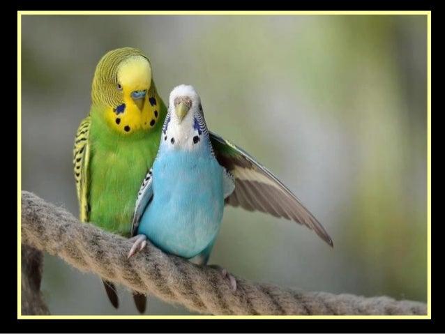Birds' high fashion show   1