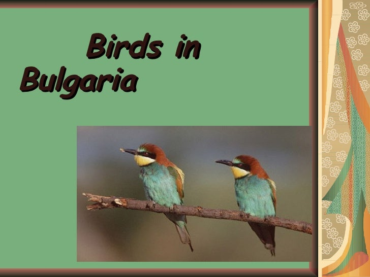 <ul><li>Birds in Bulgaria </li></ul>