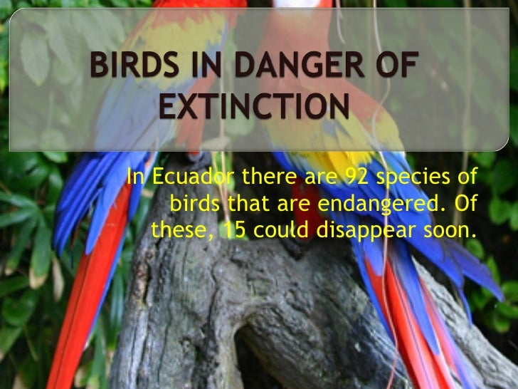 the dangers of extinction Determining the drivers of extinction risk has been a key pursuit of conservation  biology considering that body mass could be a strong.
