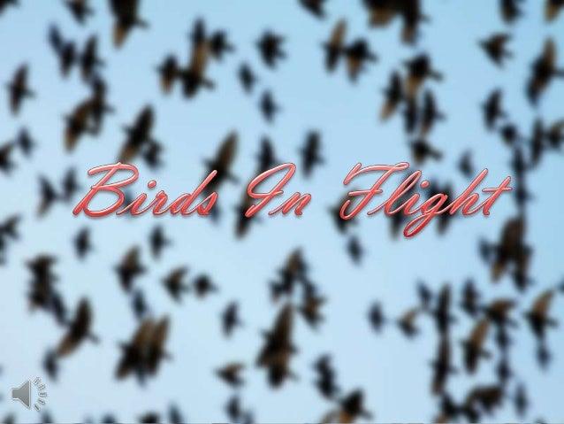 Birds in flight (v.m.)