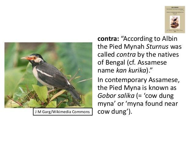 Birds In Traditional Wisdom