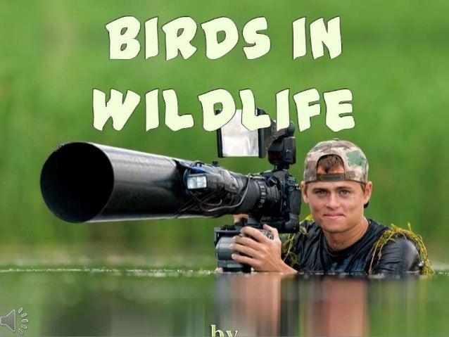 Birds in wildlife   by bence máté (hungary) (v.m.)