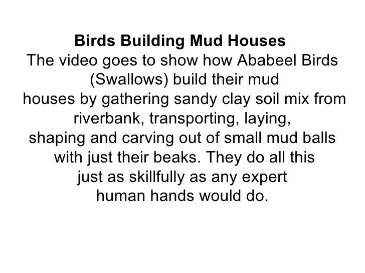 Birds Building Mud HousesThe video goes to show how Ababeel Birds          (Swallows) build their mudhouses by gathering s...