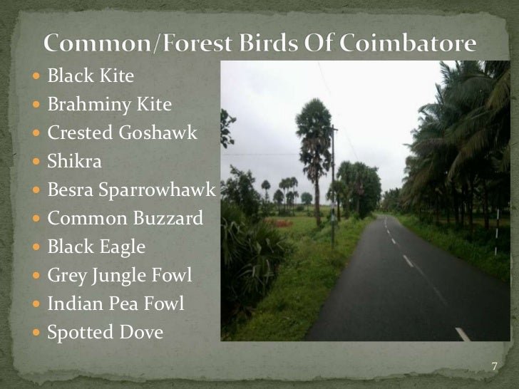 Birds of Coimbatore june 2012