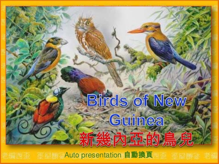 Birds of New Guinea新幾內亞的鳥兒<br />Auto presentation 自動換頁 <br />