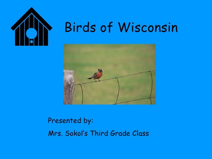 Birds of Wisconsin Presented by: Mrs. Sokol's Third Grade Class