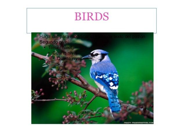 BIRDS Haga clic para modificar el estilo de texto del patrón Segundo nivel ● Tercer nivel ● Cuarto nivel ● Quinto nivel