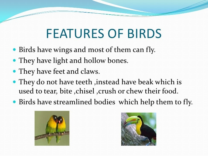 FEATURES OF BIRDS Birds have wings and most of them can fly. They have light and hollow bones. They have feet and claws...