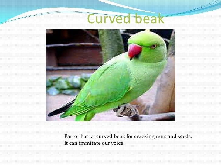 Birds ppt