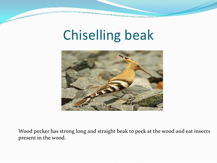 Image Result For Cracking Voice Meaning