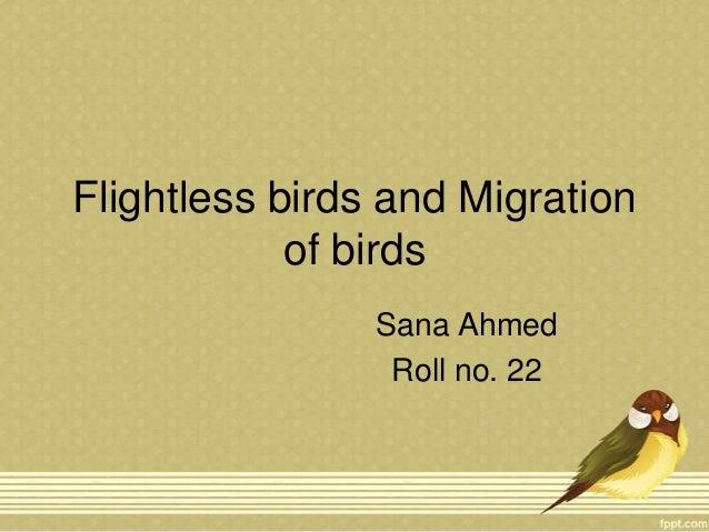 Flightless birds and Migration of birds Sana Ahmed Roll no. 22