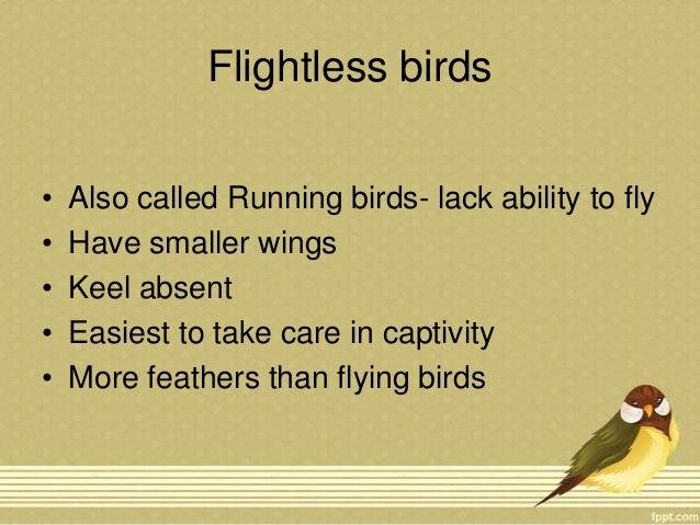 Flightless birds and Migration of birds Slide 2