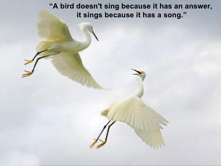Birds Quotes Entrancing Birds Quotes