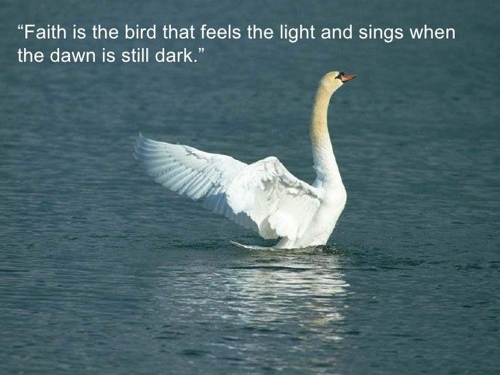 Birds Quotes Unique Birds Quotes