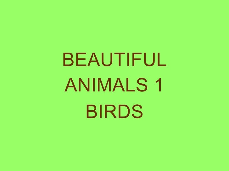 BEAUTIFUL ANIMALS 1 BIRDS