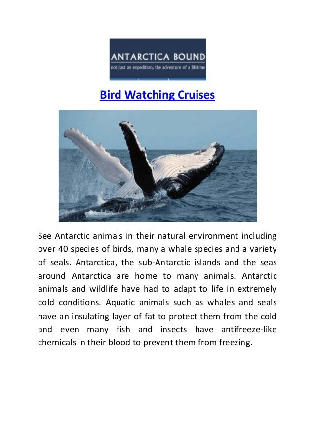 Bird Watching Cruises See Antarctic animals in their natural environment including over 40 species of birds, many a whale ...