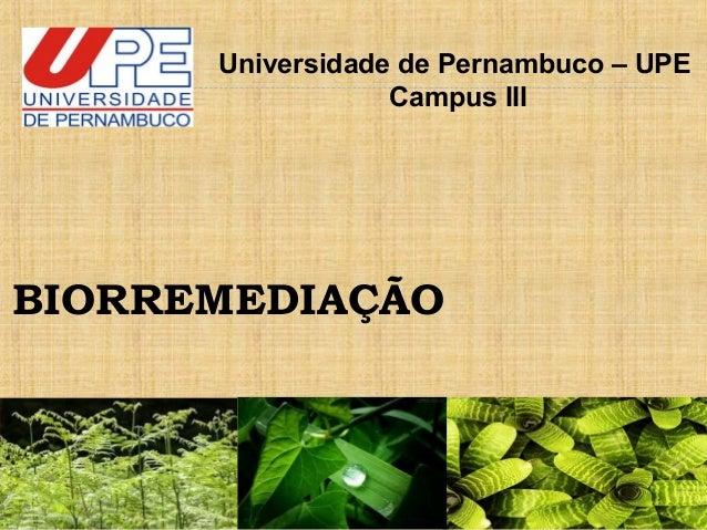 BIORREMEDIAÇÃO Universidade de Pernambuco – UPE Campus III