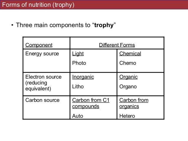 autotrophy and phototrophy Autotrophic processes information including symptoms, causes, diseases, symptoms, treatments, and other medical and health issues.