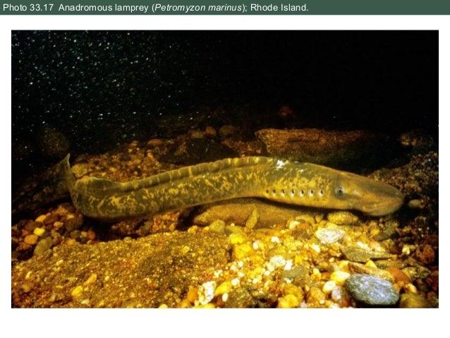 North Maharashtra University 2007 B.Sc Zoology FY - Question Paper