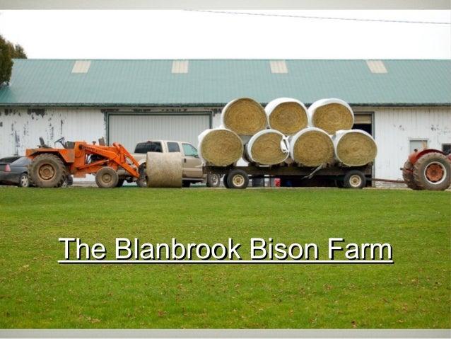The Blanbrook Bison FarmThe Blanbrook Bison Farm