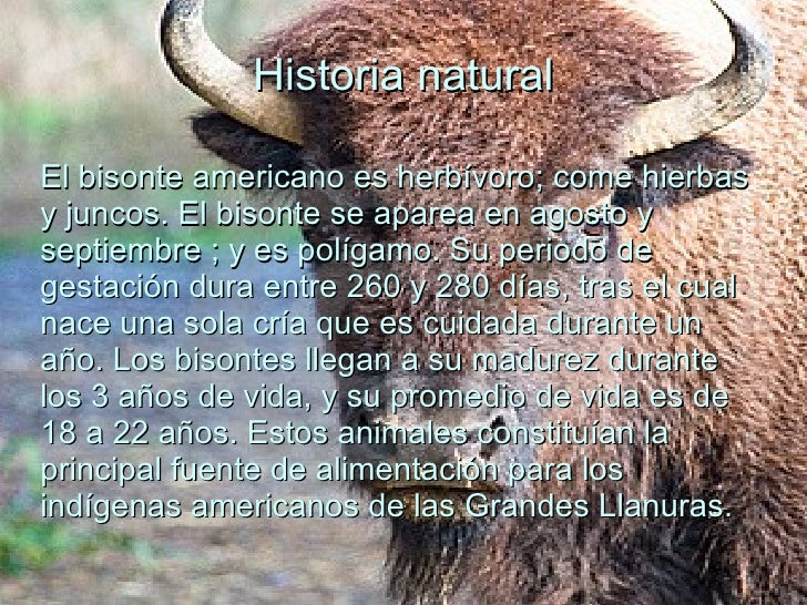 Q Es Bisonte Bisonte