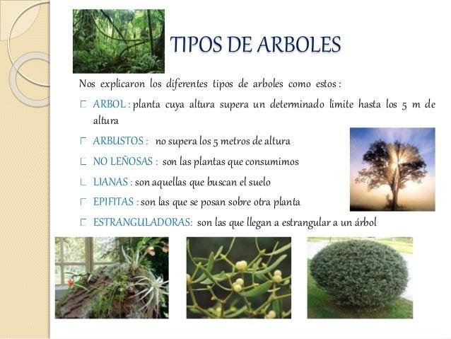 Bitacora jardin botanico for Arboles del jardin botanico