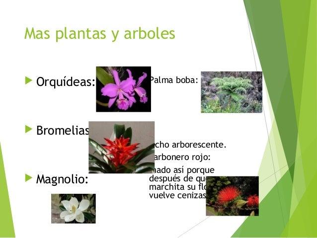 Bitacora jardin botanico rll nicolas urrego silva 902 - Plantas de jardin nombres ...