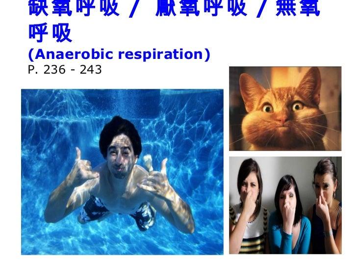 缺氧呼吸 / 厭氧呼吸 / 無氧呼吸(Anaerobic respiration)P. 236 - 243