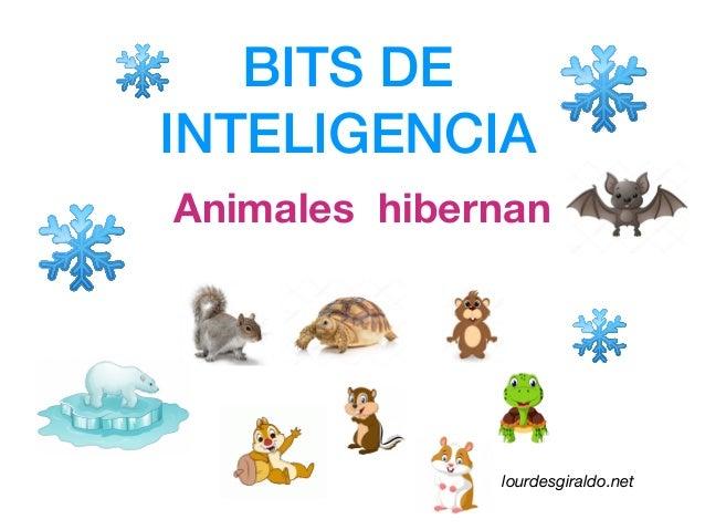 BITS DE INTELIGENCIA Animales hibernan lourdesgiraldo.net