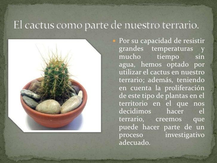 Bit cora de un terrario for Informacion sobre el cactus