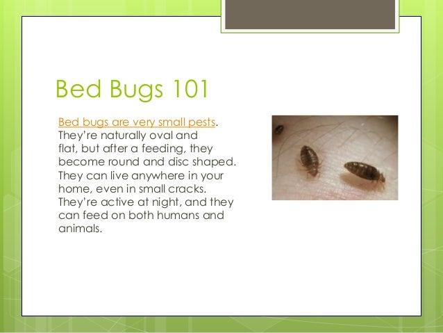 Dealing With Bed Bugs Naturally