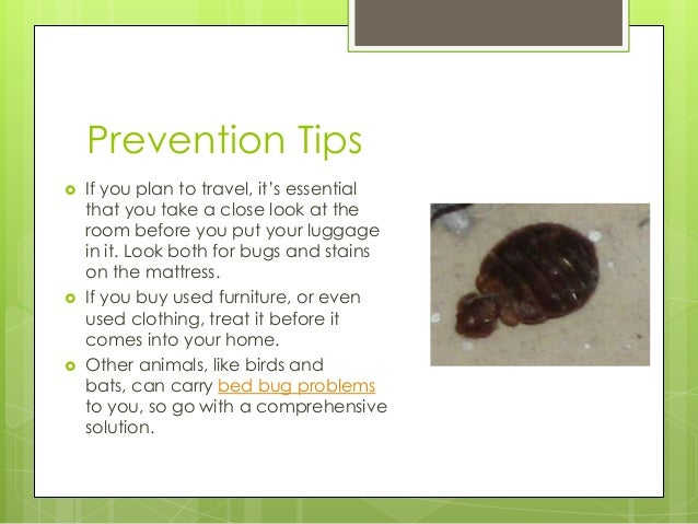 How To Treat Bed Bugs In One Bed Room