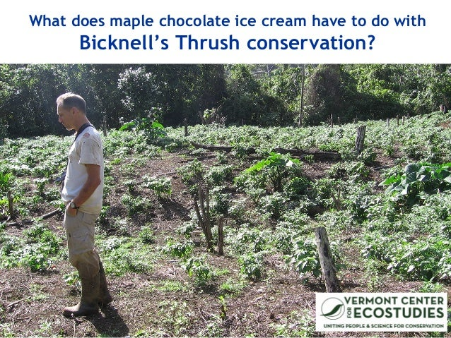 What does maple chocolate ice cream have to do with Bicknell's Thrush conservation?