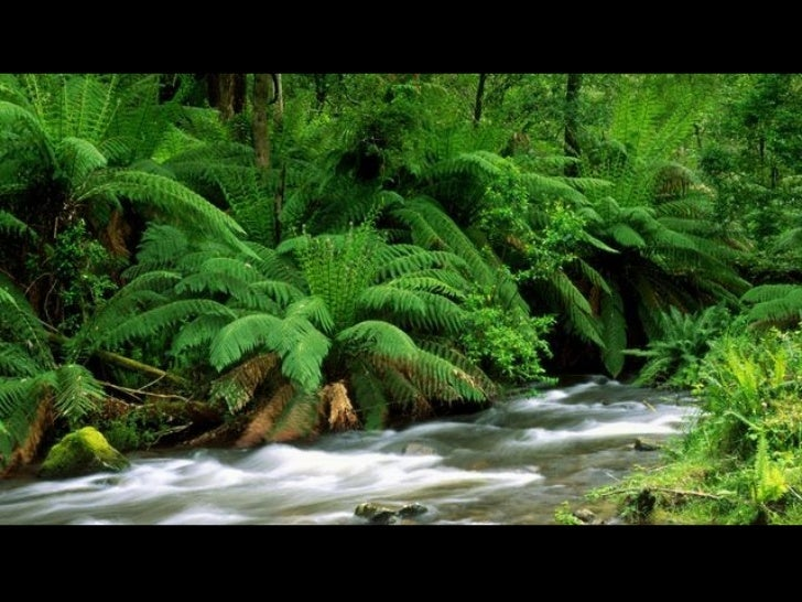 Yarra Ranges National Park, Australia