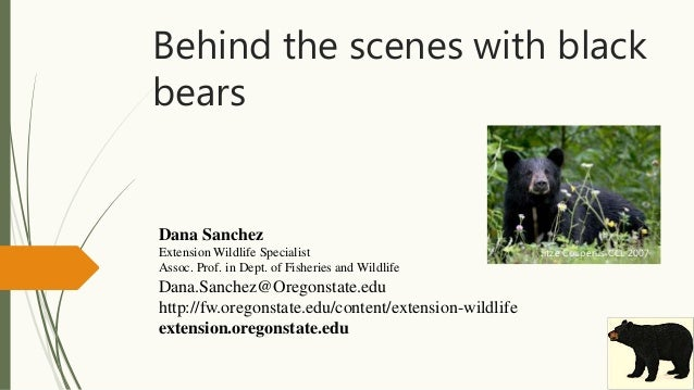 Behind the scenes with black bears Dana Sanchez Extension Wildlife Specialist Assoc. Prof. in Dept. of Fisheries and Wildl...