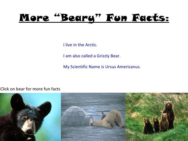 Black bears, and brown bears, and