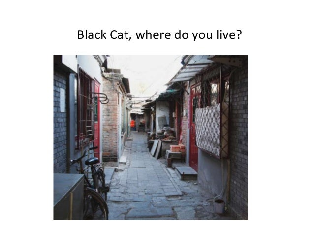 Black Cat, where do you live?